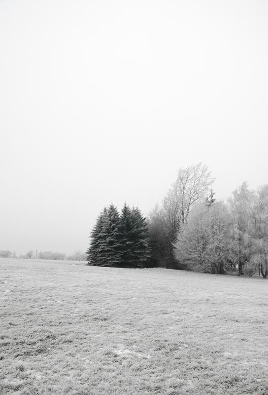 Winter Wonderland Aluminium Print