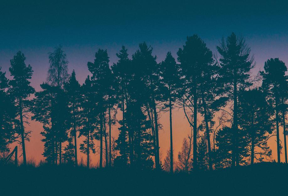 The Dawn -Acrylglasbild