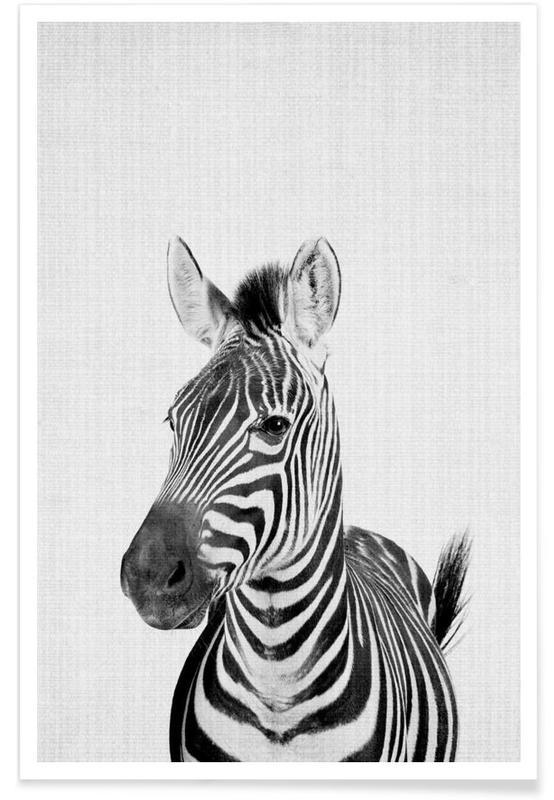 Zebra Black & White Photograph Poster