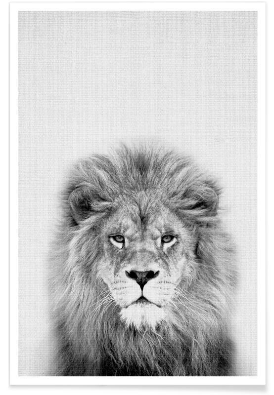 Lion Black & White Photograph Poster