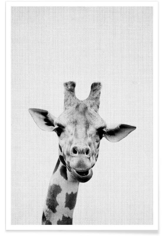 Giraffe zwart-wit foto poster