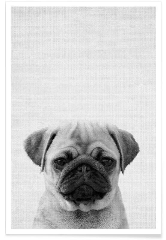 Pug Black & White Photograph Poster