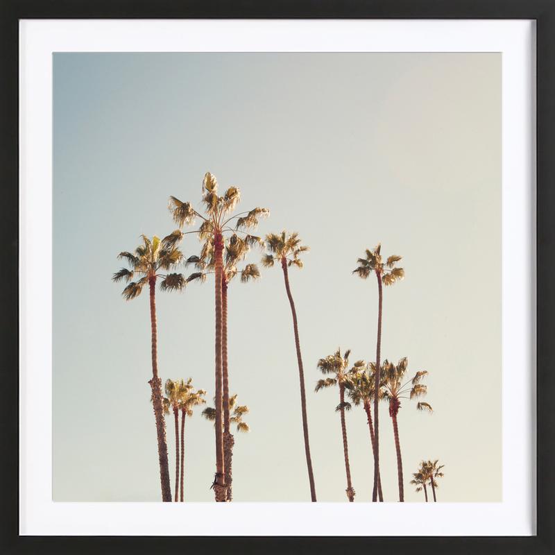 Palms -Bild mit Holzrahmen