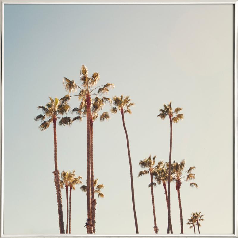 Palms -Poster im Alurahmen