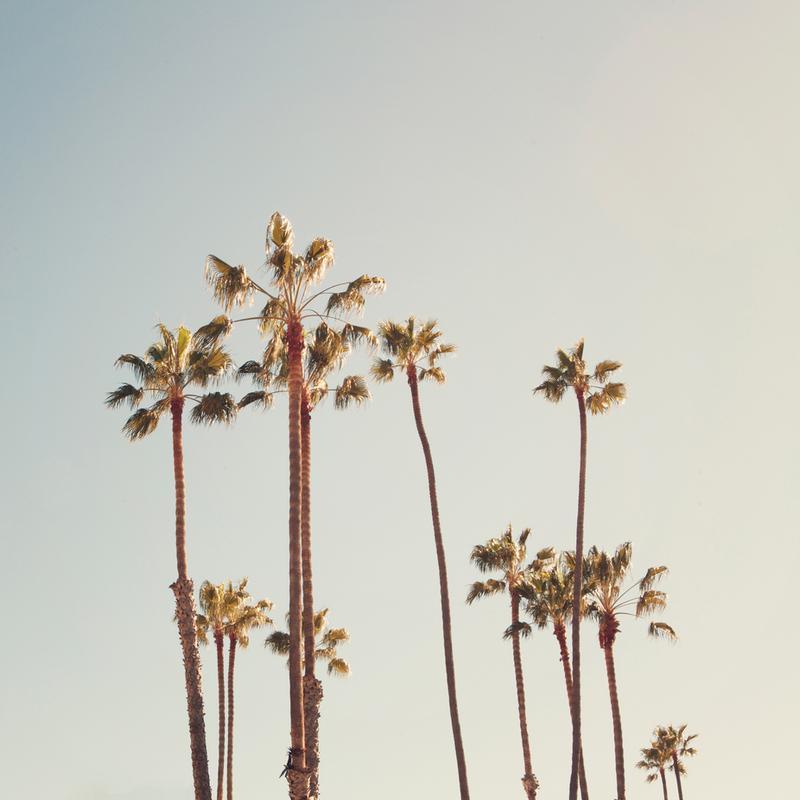 Palms -Acrylglasbild