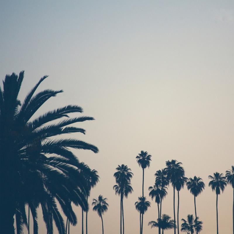Echo Park Palms Canvas Print