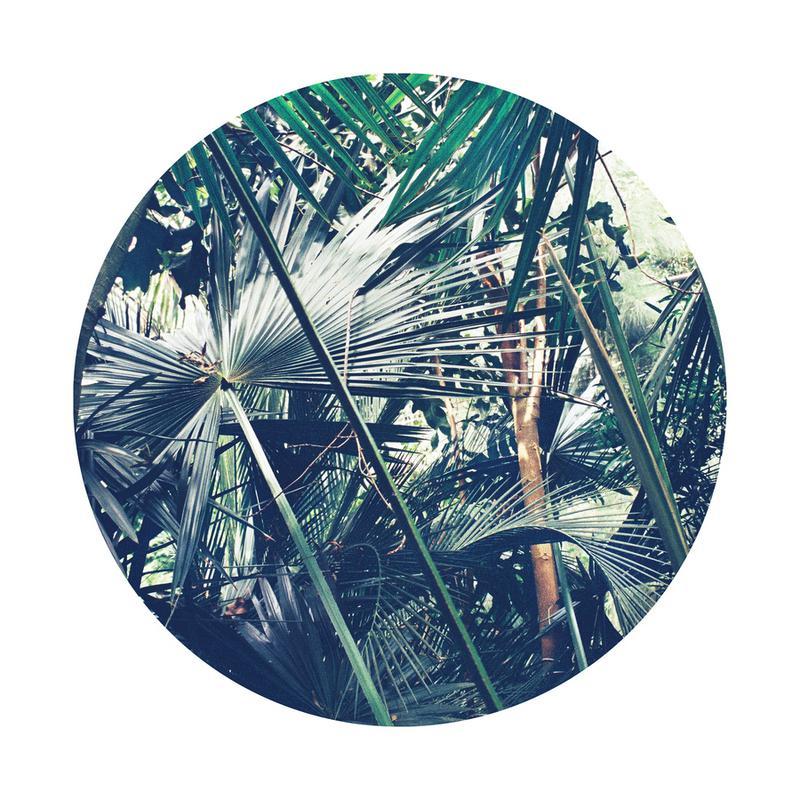 Into the Tropics (Green) Canvas Print