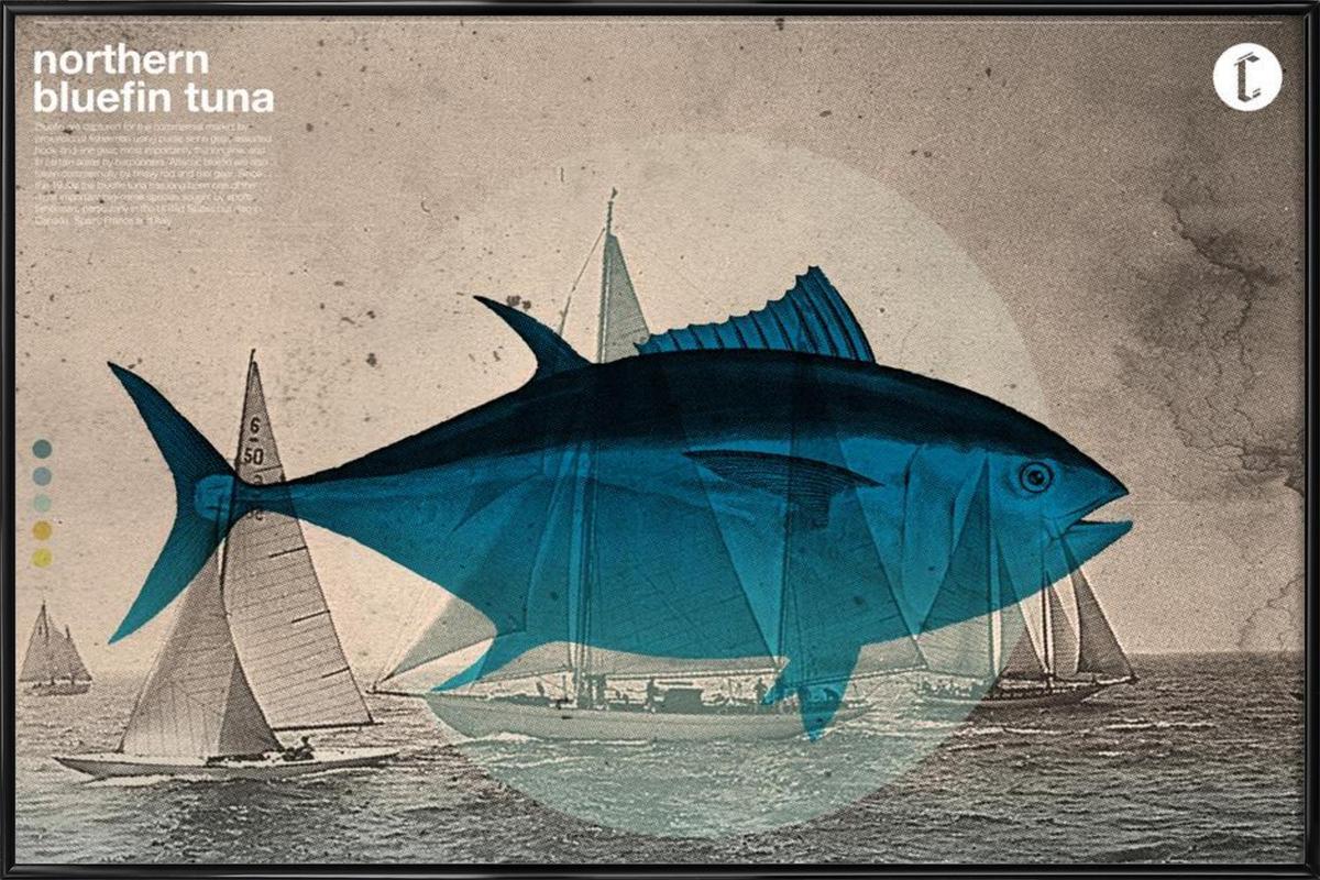 Northern Bluefin -Bild mit Kunststoffrahmen