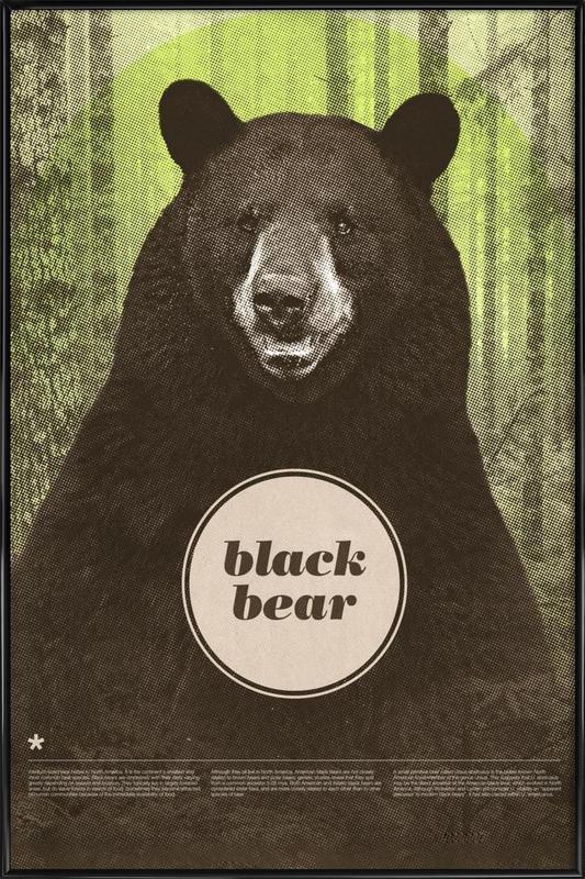 Black Bear ingelijste poster