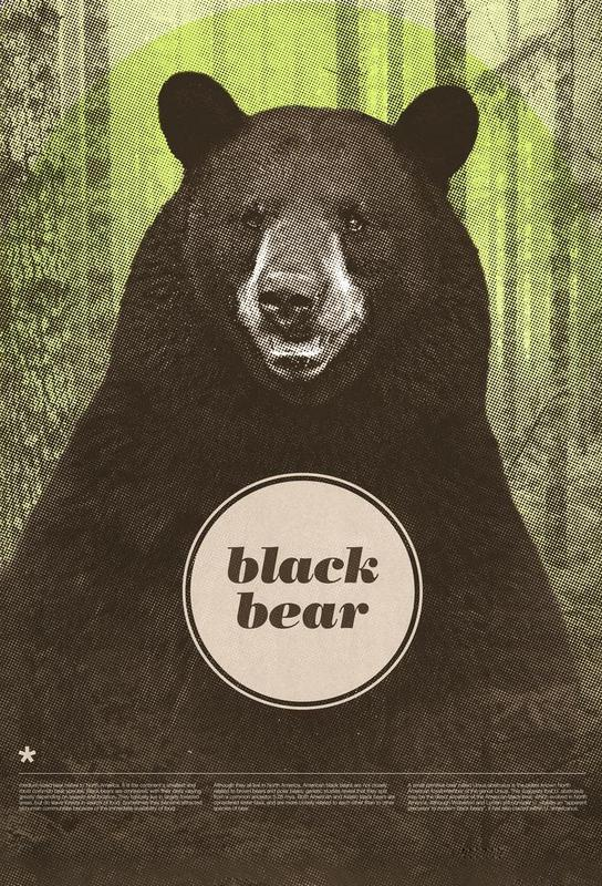 Black Bear acrylglas print