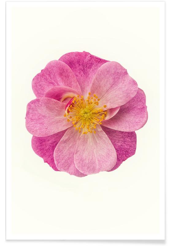 Single Wild Pink affiche