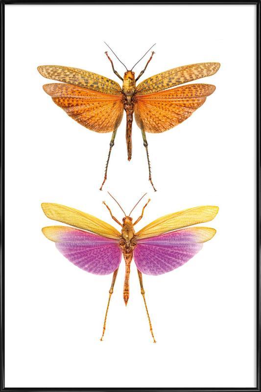 Insect 1 ingelijste poster