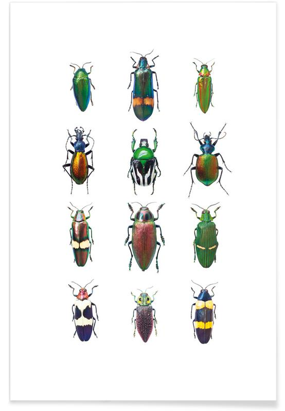 Insect 3 Poster