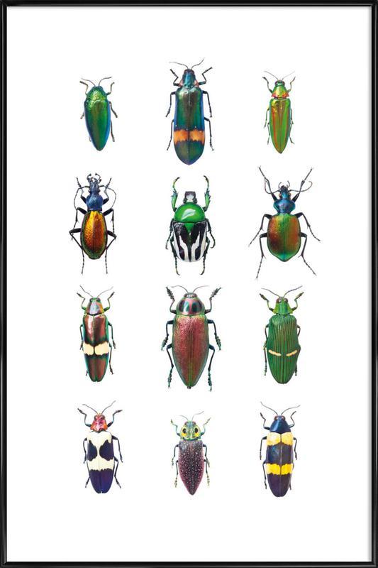 Insect 3 ingelijste poster