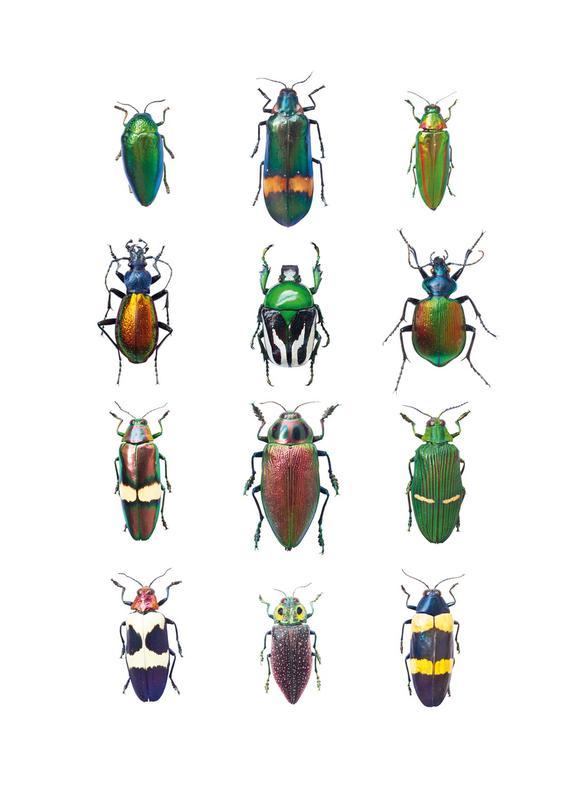 Insect 3 -Leinwandbild