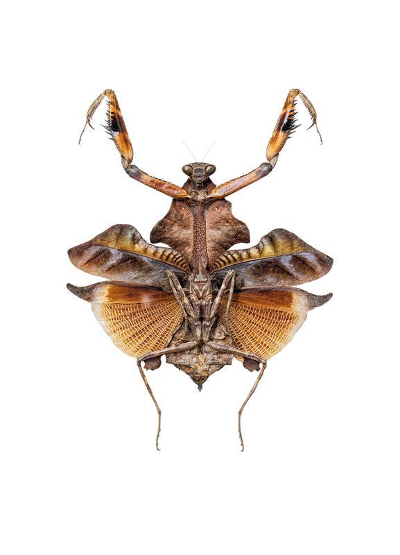 Insect 5 -Leinwandbild