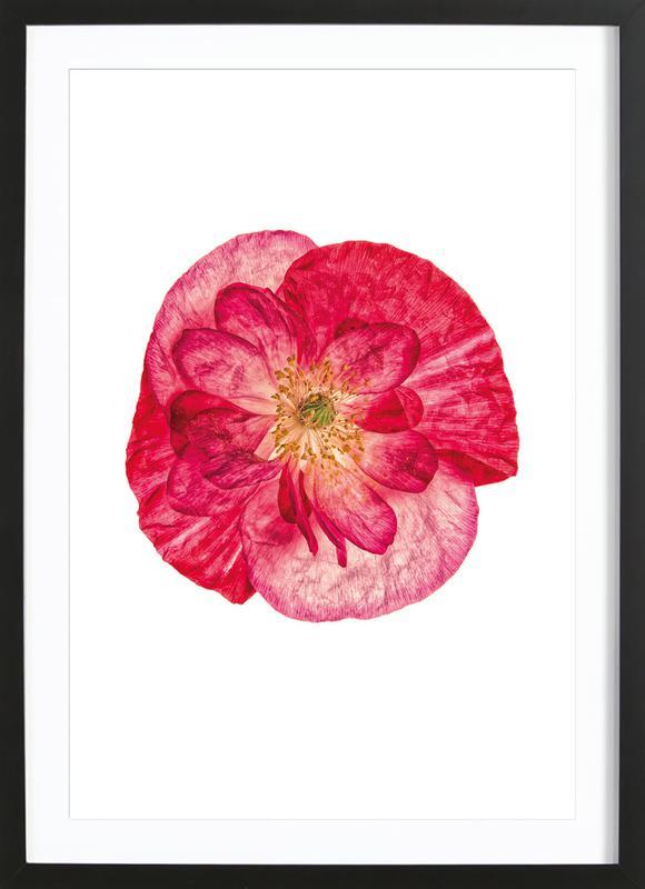 Poppy 1 -Bild mit Holzrahmen