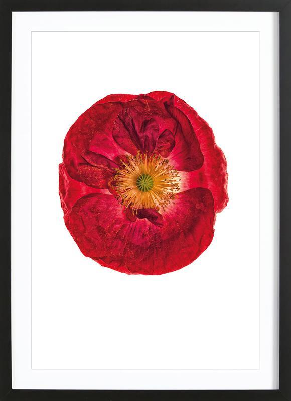 Poppy 2 -Bild mit Holzrahmen