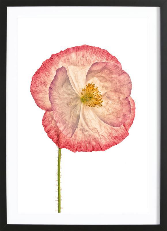 Poppy 3 -Bild mit Holzrahmen