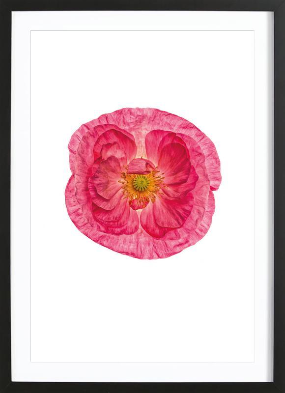 Poppy 4 -Bild mit Holzrahmen