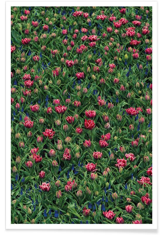 Tulip Field Pink Poster