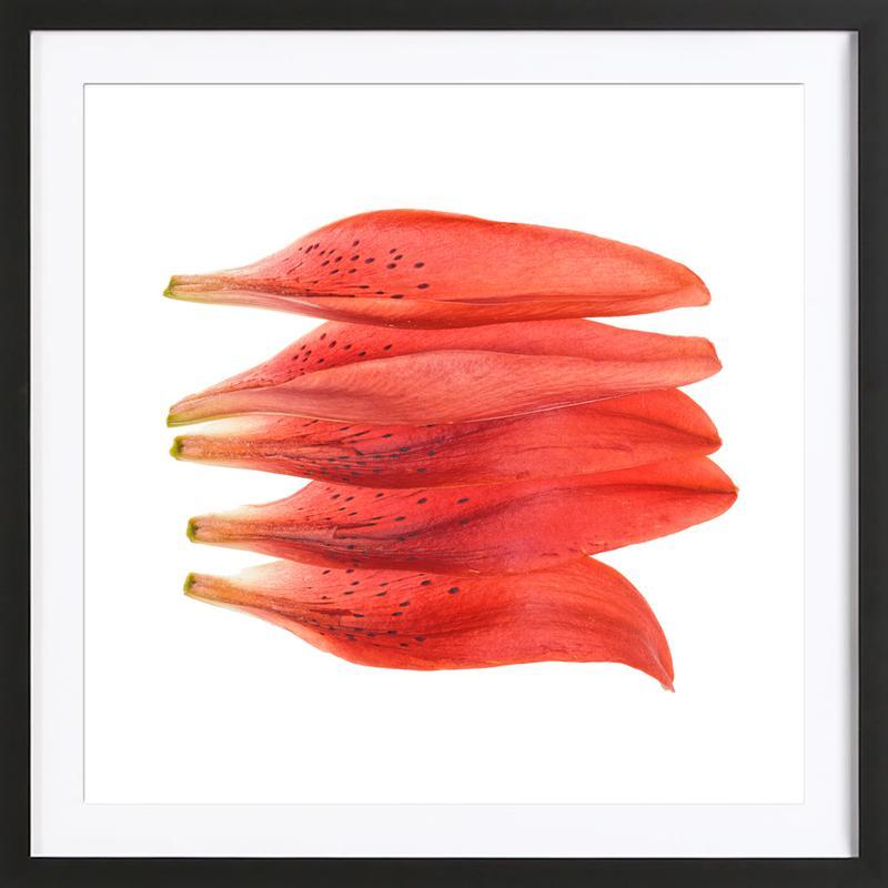 Lilly Petals Orange affiche sous cadre en bois