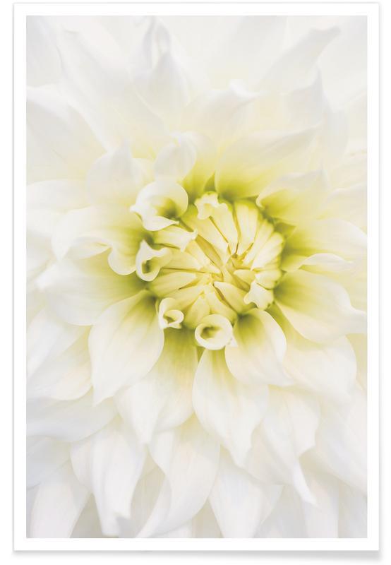 White Dahlia Poster