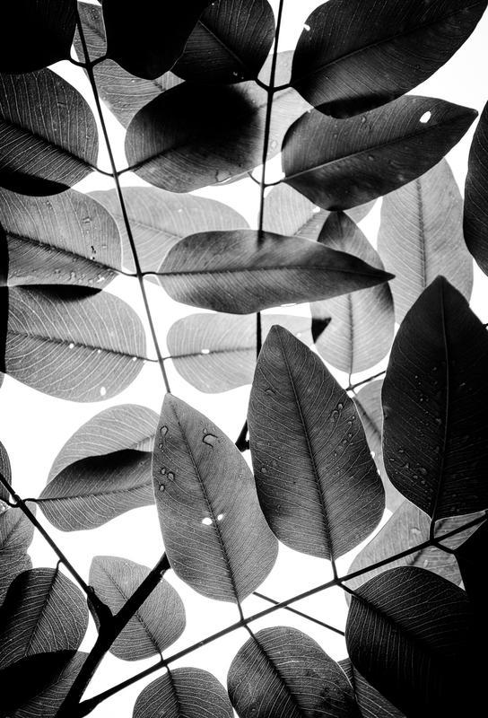Experiments with Leaves II tableau en verre