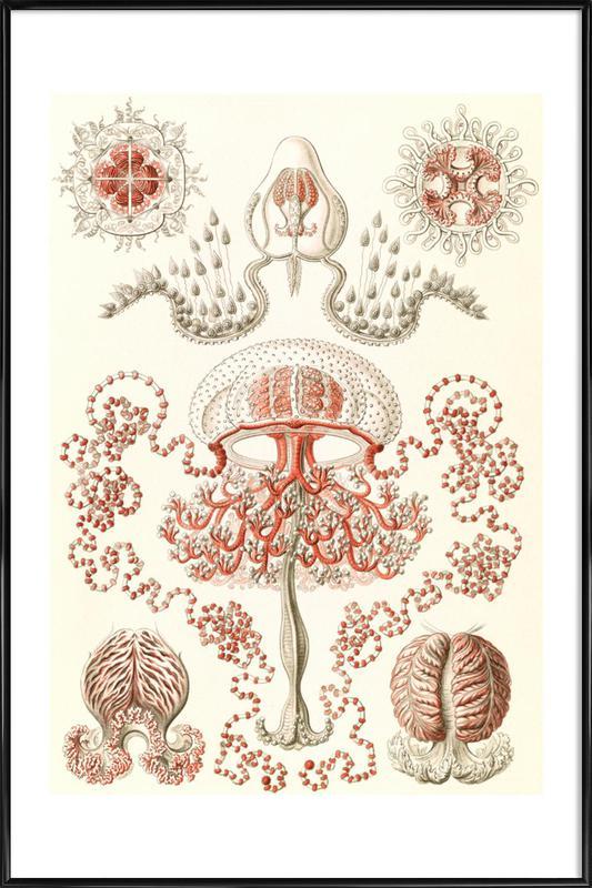 Blumenquallen -Bild mit Kunststoffrahmen