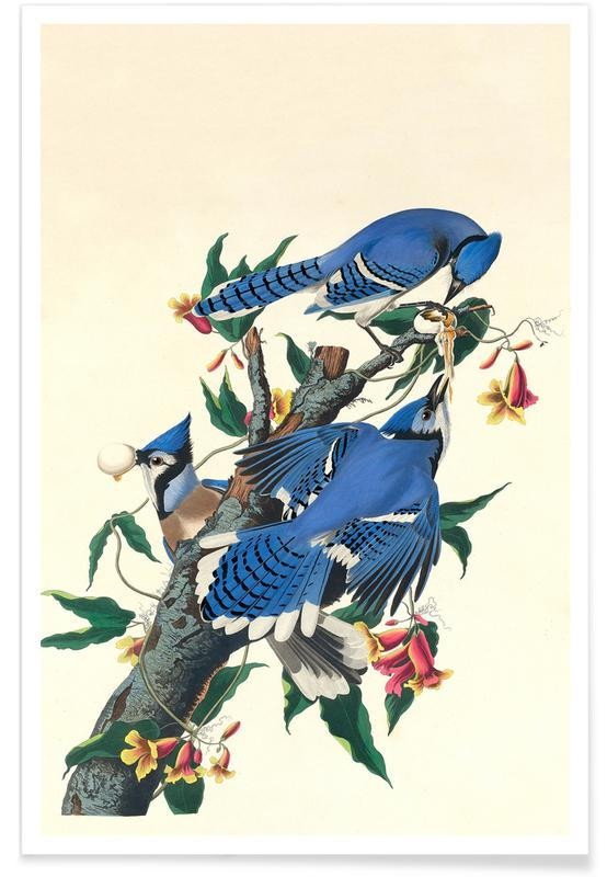 Blue Jay, 1831 Poster