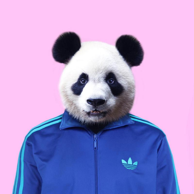 Panda toile