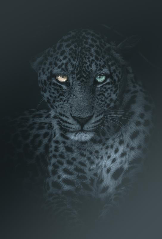 Eyes in the Night Aluminium Print
