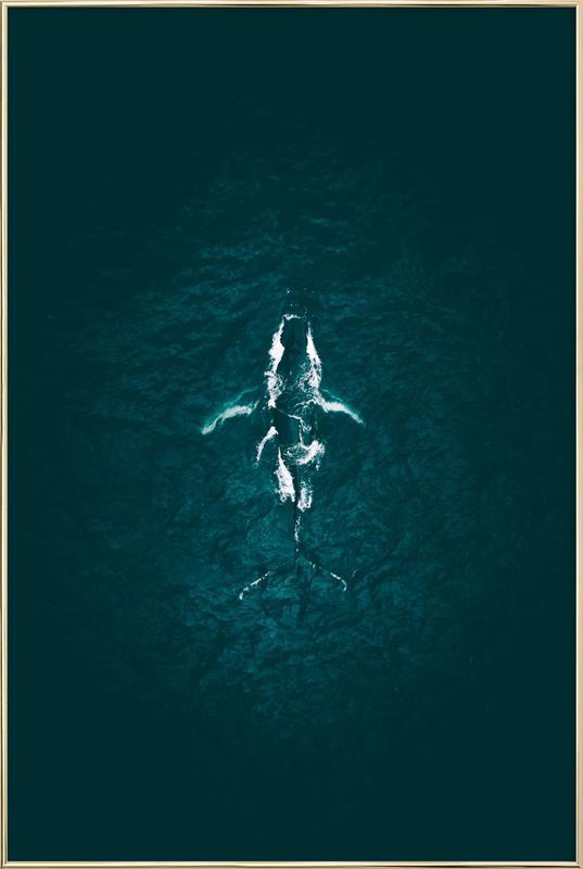 Humpback Breach -Poster im Alurahmen