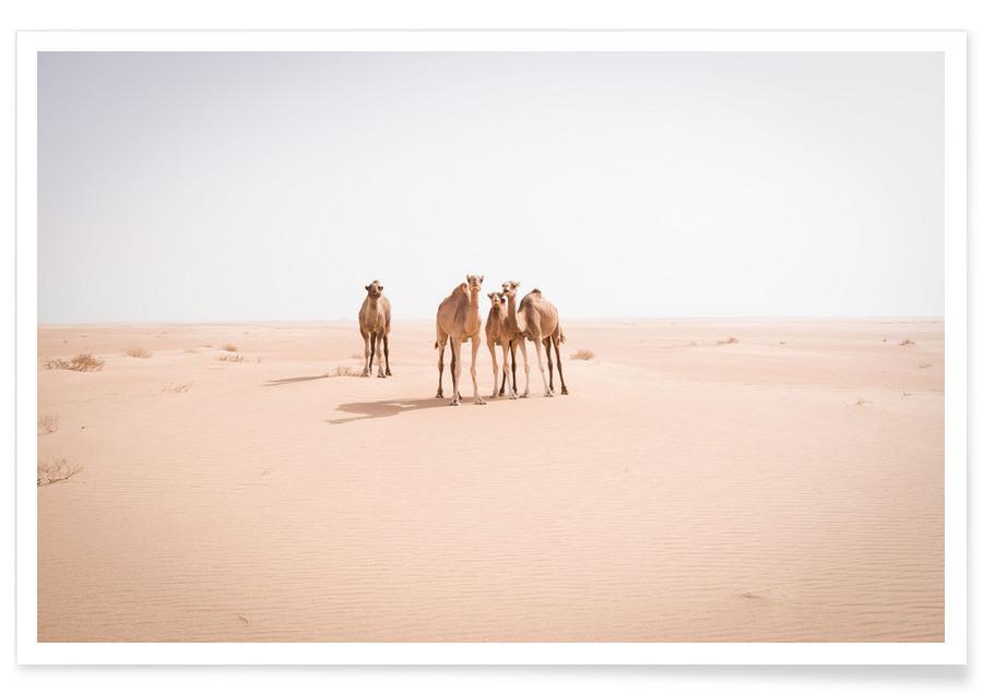 Camels Sahara -Poster