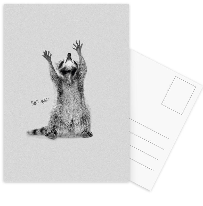 Racoon Postcard Set