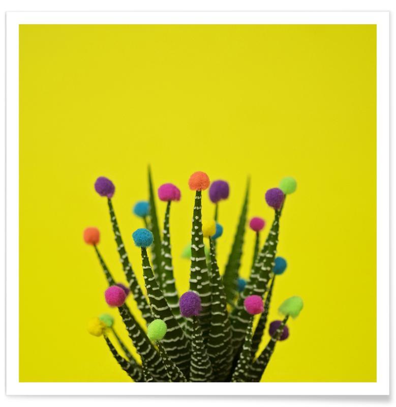 Haworthia in Bloom Poster