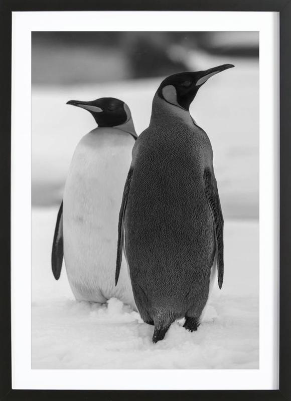 The Penguins Framed Print