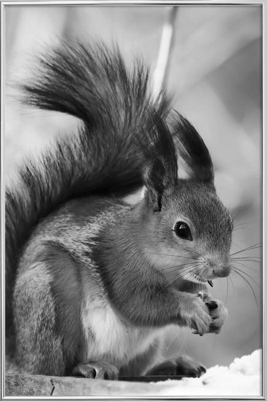 The Squirrel Poster i aluminiumram