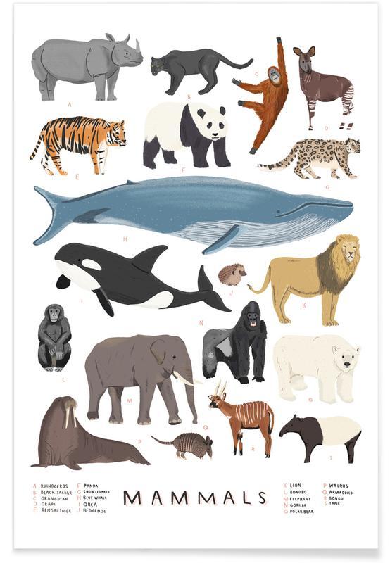 Mammals Illustration Poster