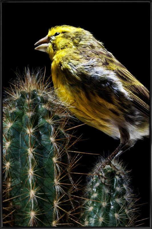 Birds Everywhere 16 ingelijste poster