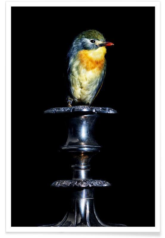 Birds Everywhere 21 affiche