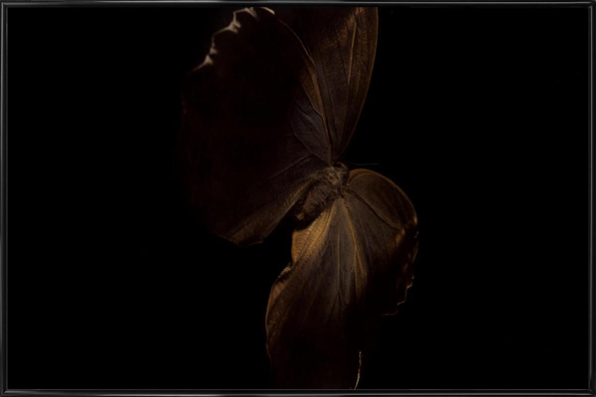 Butterflies 4 affiche encadrée