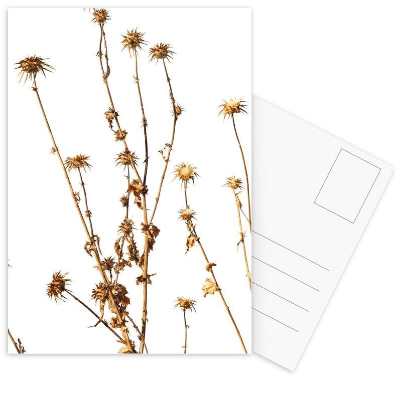 Flora - Mariendistel cartes postales