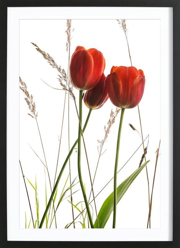 Flora - Tulpe -Bild mit Holzrahmen