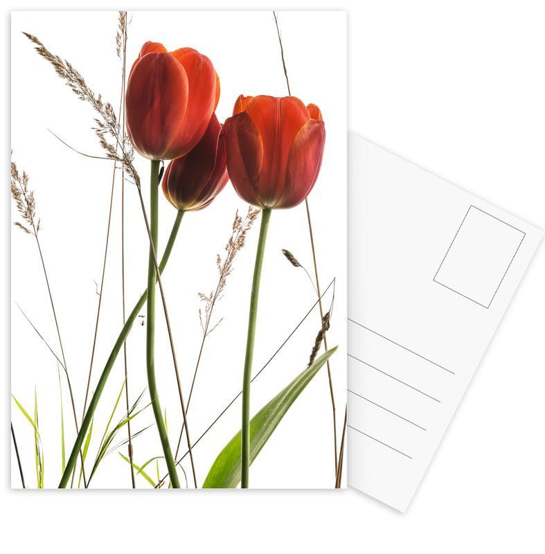 Flora - Tulpe -Postkartenset