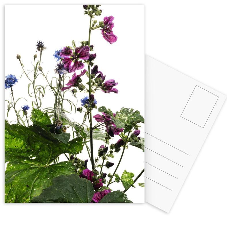 Flora - Wilde Malve -Postkartenset