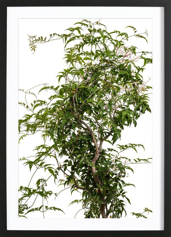 Flora - Jasmin affiche sous cadre en bois