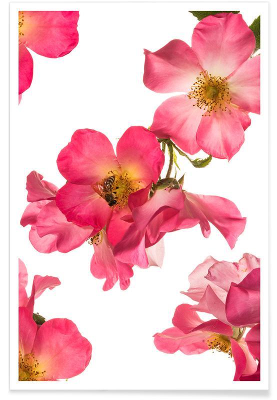 Flora - Rose 2 -Poster