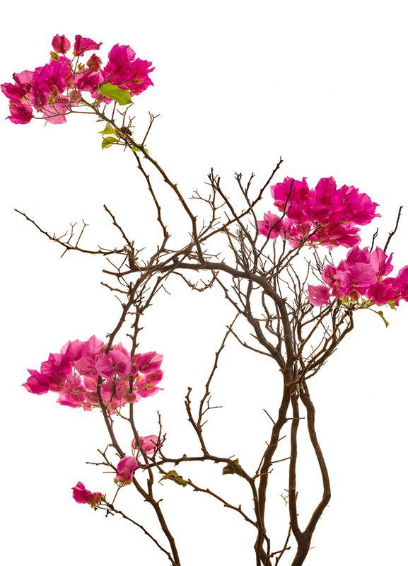 Flora - Bougainvillea canvas doek