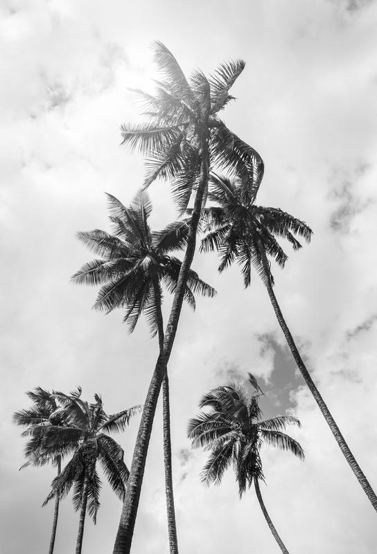 Palme Bounty -Alubild